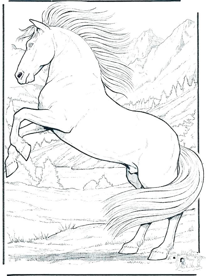 660x880 Horse Coloring Picture