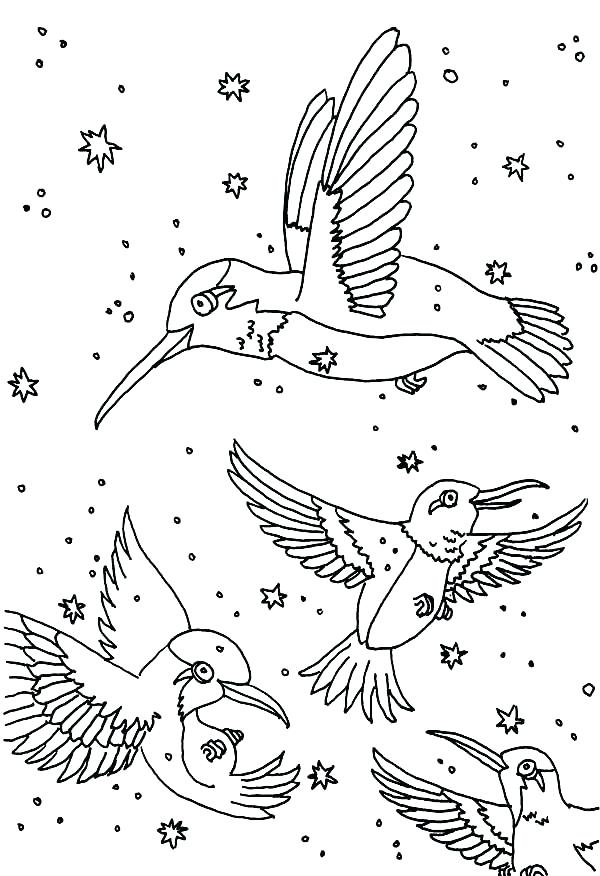600x876 Hummingbird Coloring Hummingbird Coloring Pages With Textured