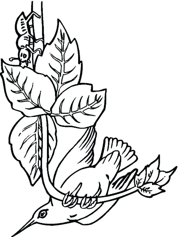 Free Hummingbird Coloring Pages At Getdrawings Com Free For
