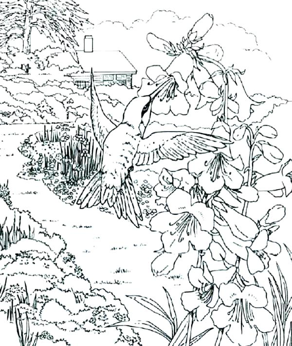 600x710 Hummingbird Coloring Page Simple Hummingbird Coloring Page Fee
