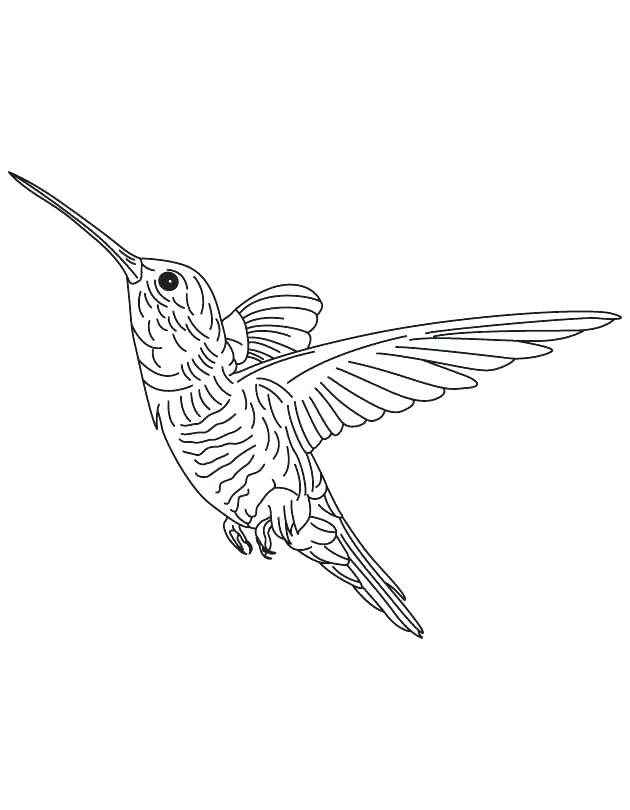 630x810 Hummingbird Coloring Pages Hovering Hummingbird Coloring Page