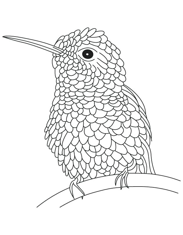630x810 Hummingbird Coloring Pages Textured Hummingbird Coloring Page