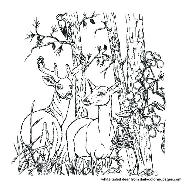 600x600 Free Printable Deer Hunting Coloring Pages Animal For Adults White