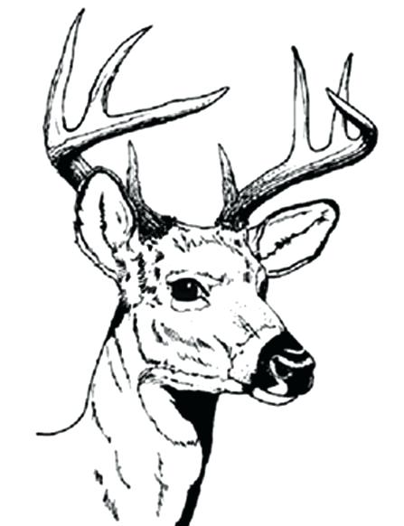 447x582 Hunting Coloring Pages Deer Coloring Sheets Deer Hunting Coloring