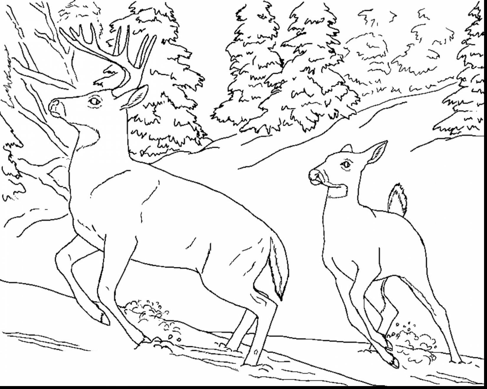 1650x1320 Willpower Hunting Coloring Pages For Adults Unique Turkey Design