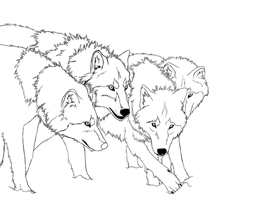1022x781 Wolf Pack Hunting Coloring Pages