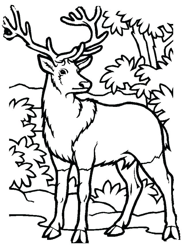 650x866 Hunting Printable Coloring Pages Top Deer Coloring Pages Free