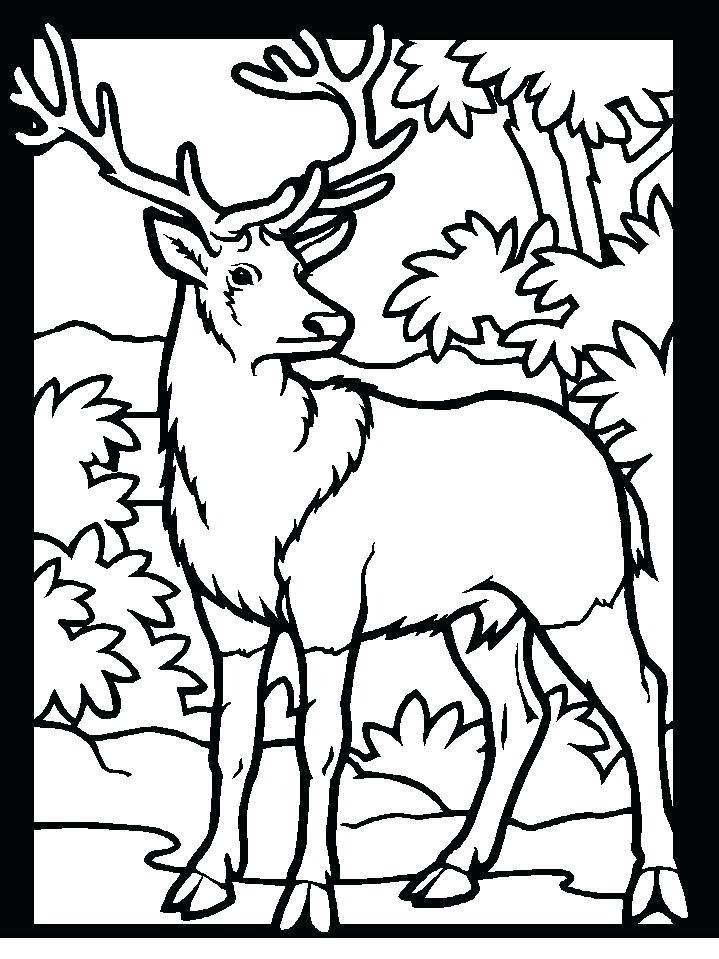 719x959 Deer Printable Coloring Pages Printable Coloring Pages Deer
