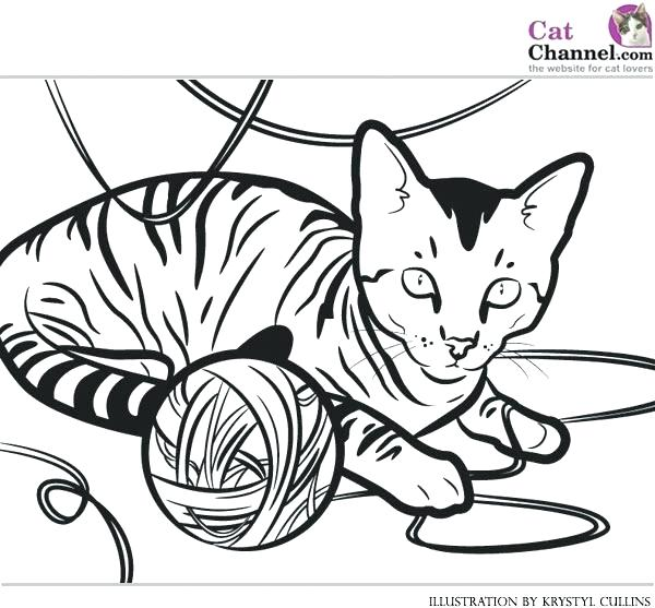 600x557 Free Cat Coloring Pages Cat Coloring Page House Cat Coloring Pages