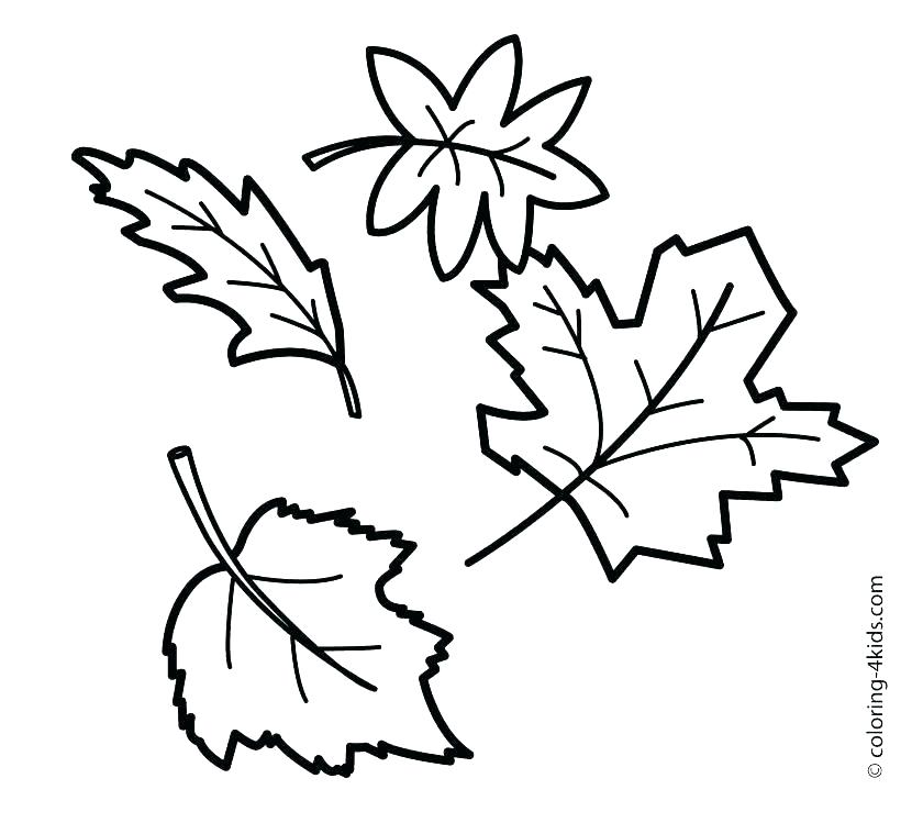 Free Leaf Coloring Pages