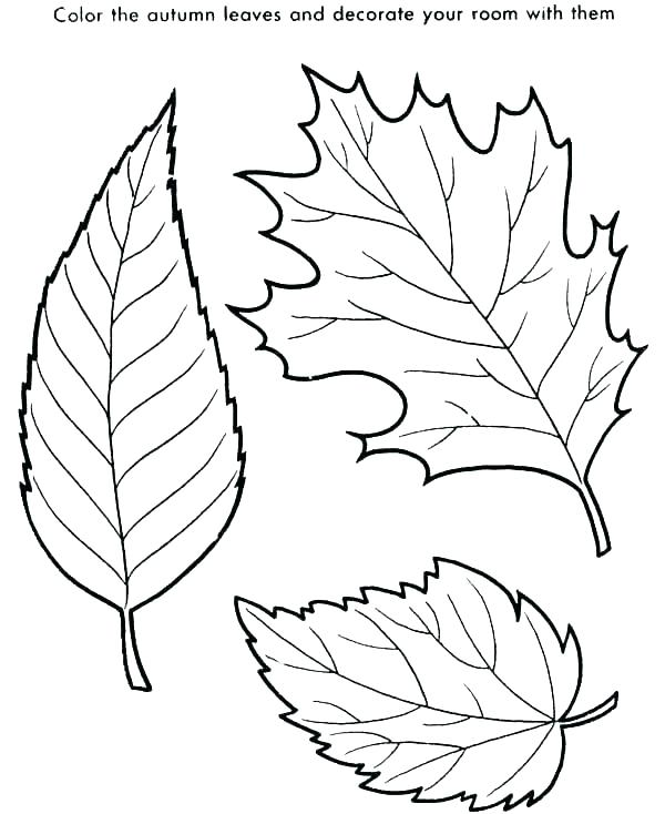600x734 Leaf Color Pages Awesome Leaf Coloring Pages And Printable Leaves