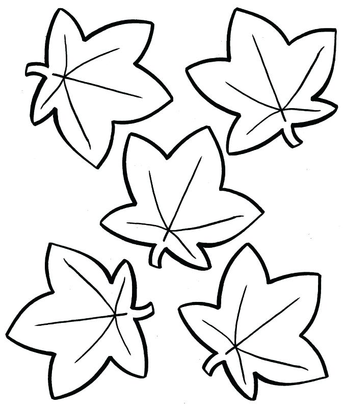677x800 Leaf Coloring Page Leaf Coloring Pages For Preschool Autumn