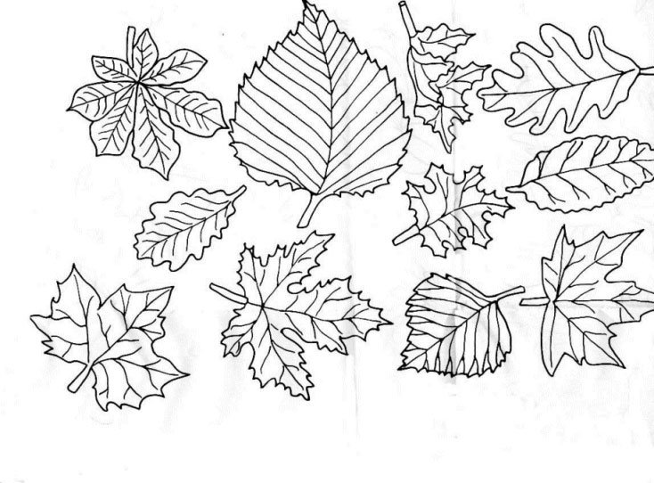 734x542 Leaves Coloring Pages Download