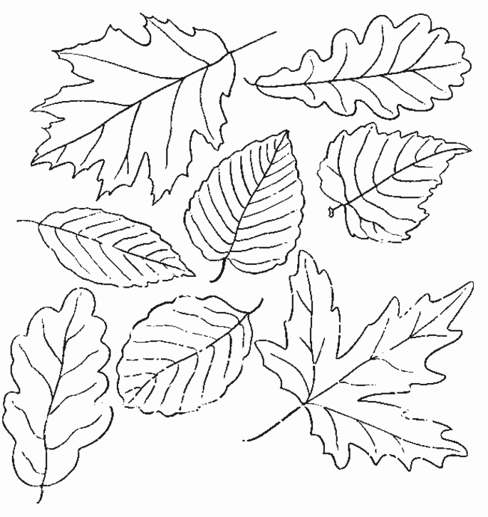 685x726 Coloring Pages Leaves Fall Interesting Leaf Coloring Pages