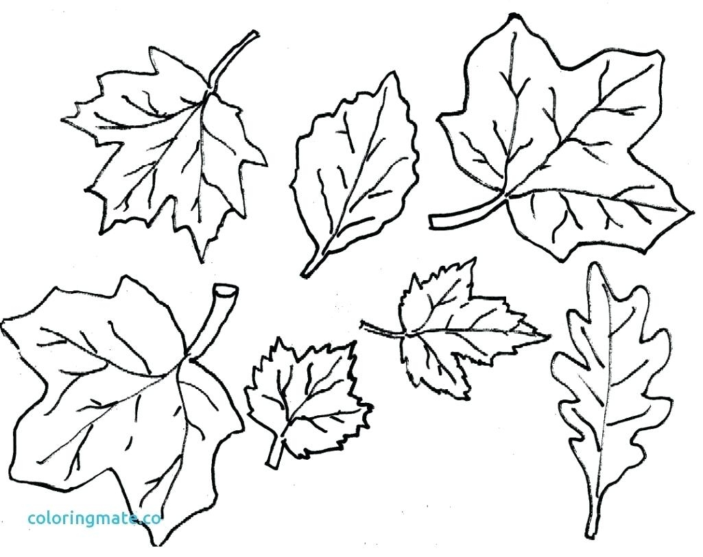 1025x813 Cool Coloring Printable Leaves Coloring Pages Free Leaf Color
