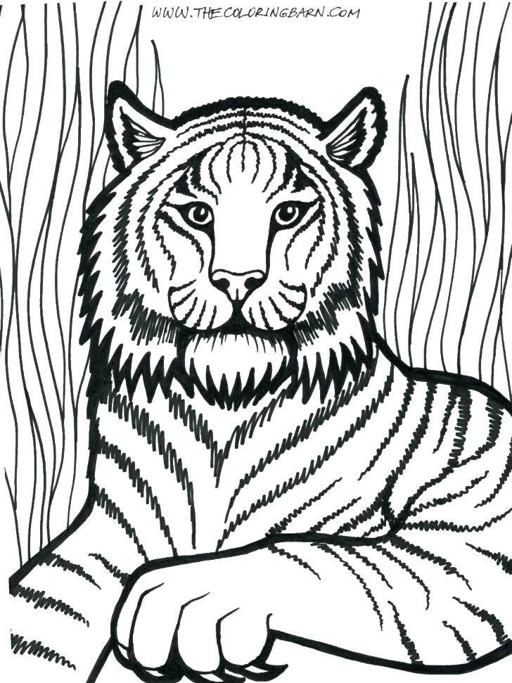 728x971 Coloring Pages Of Lions Coloring Pictures Of Lions Lion Coloring