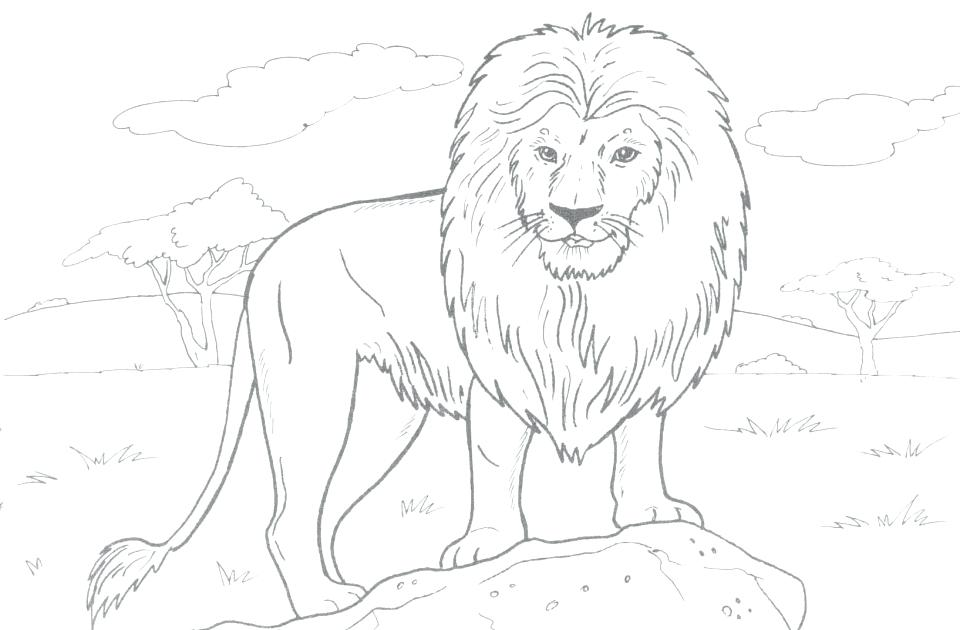 960x630 Lions Coloring Pages