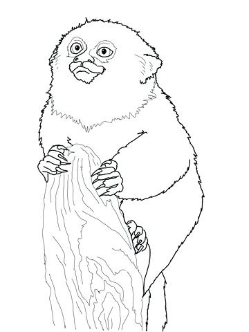 360x480 Monkey Coloring Pages Baby Tunes Cute Monkey Coloring Pages Sheets