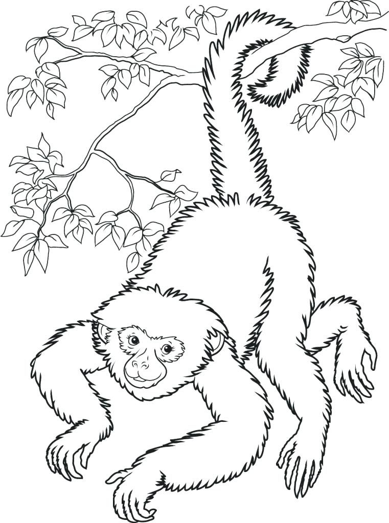 761x1024 Spider Monkey Coloring Page Free Monkey Coloring Pages Spider
