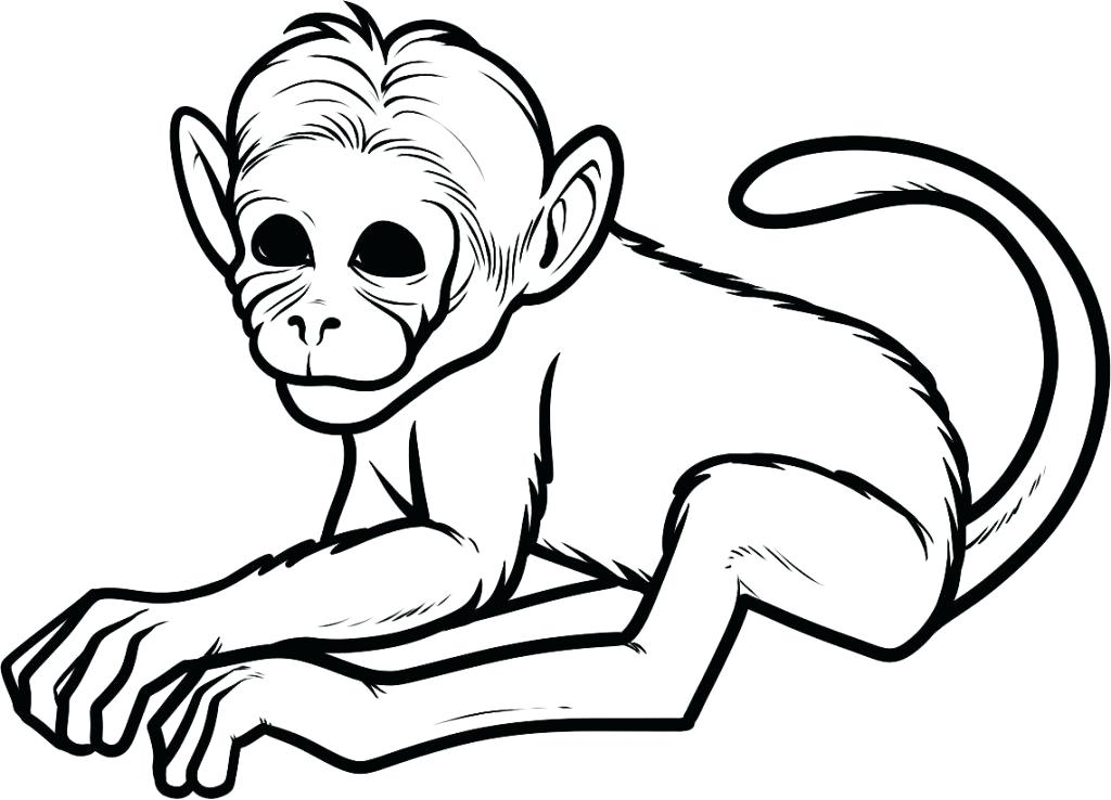 1024x738 Free Monkey Coloring Pages Curious Monkey Coloring Page Free