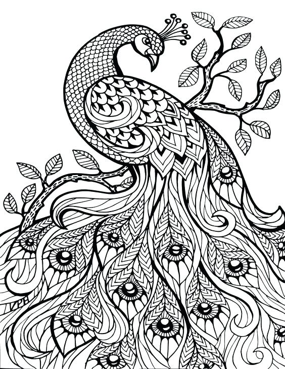 564x729 Beautiful Peacock Coloring Pages Adult Stress Relief Coloring