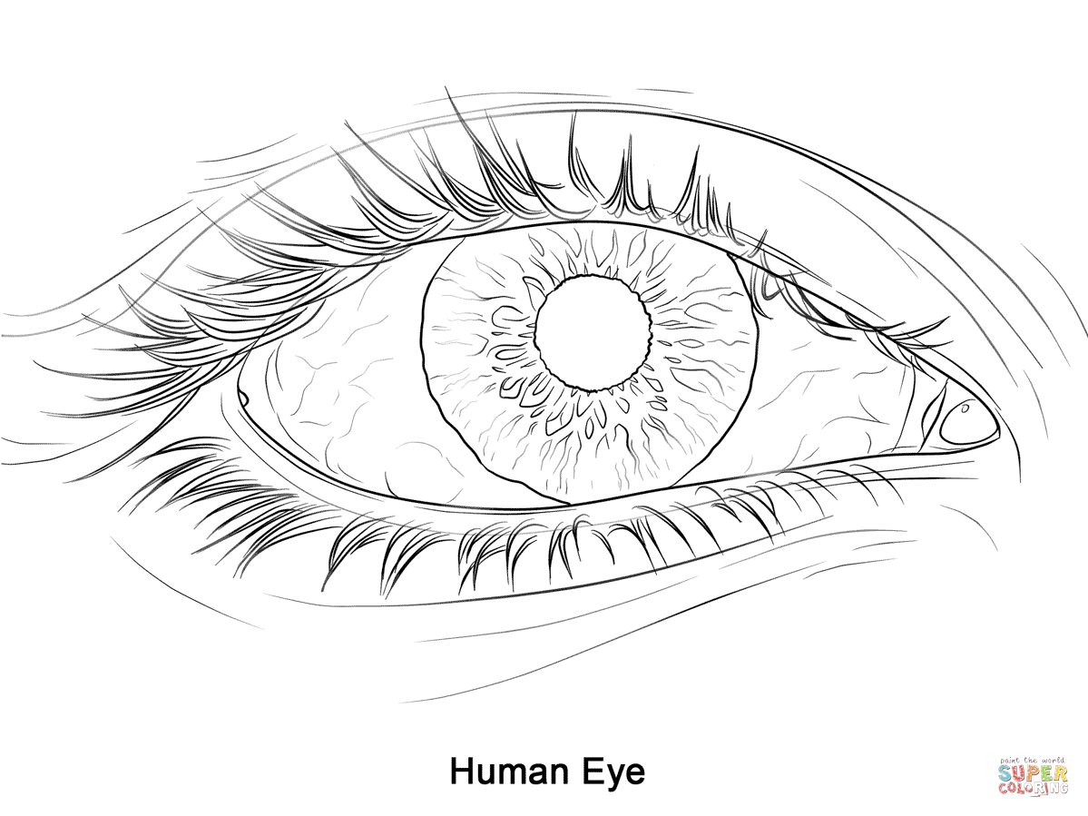 1199x899 Human Eye Coloring Page Free Printable Pages Inside Realistic