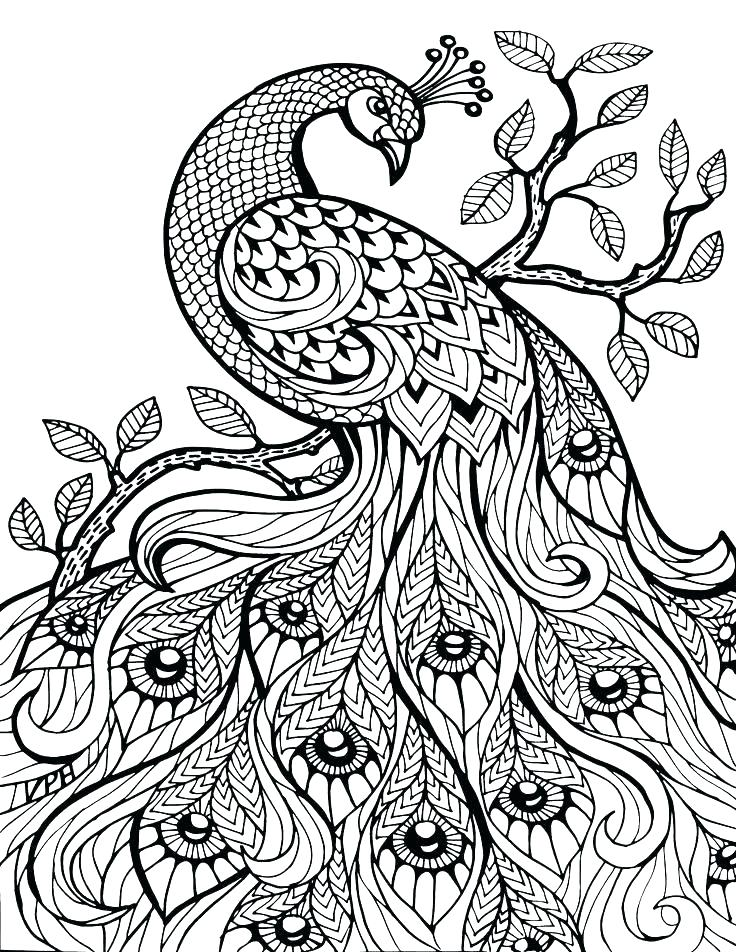 Free Printable Australian Animals Colouring Pages | Australian ... | 952x736