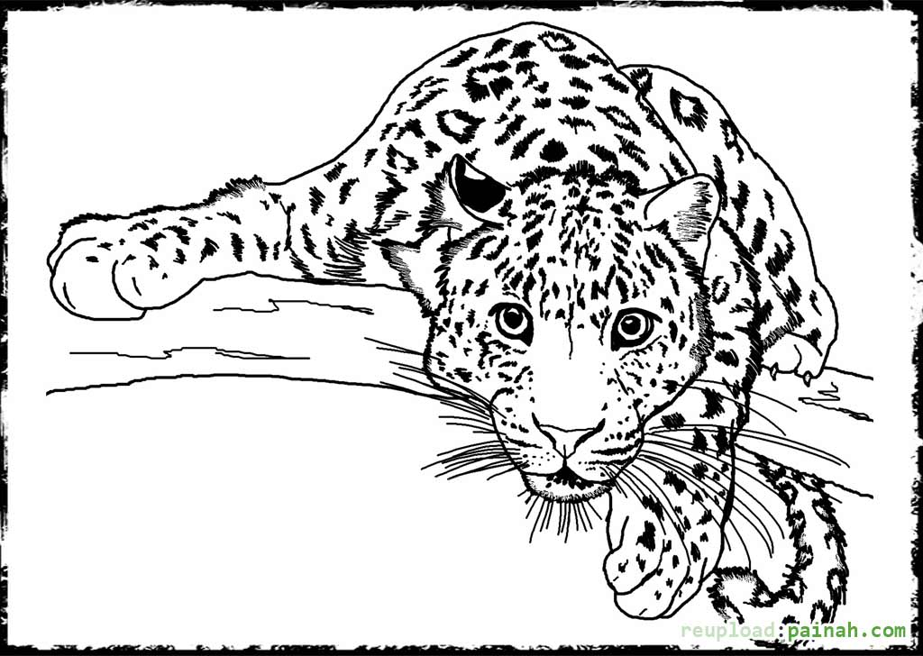 Tiger - wild animals coloring pages for kids, printable free ... | 728x1024