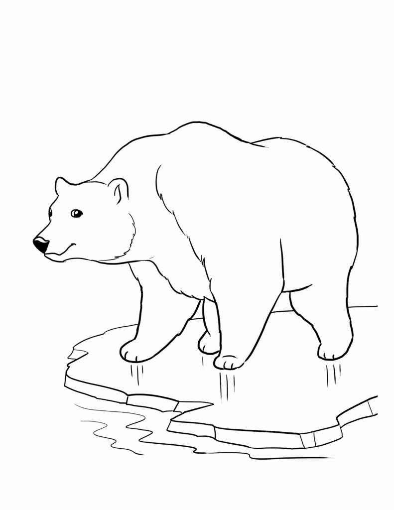 Free Printable Bear Coloring Pages