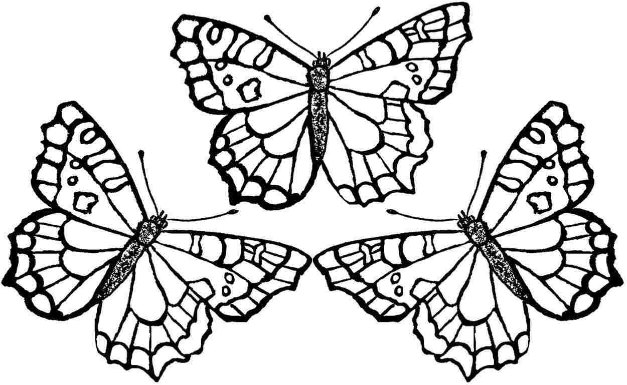 1250x769 Butterfly Coloring Pages Printable