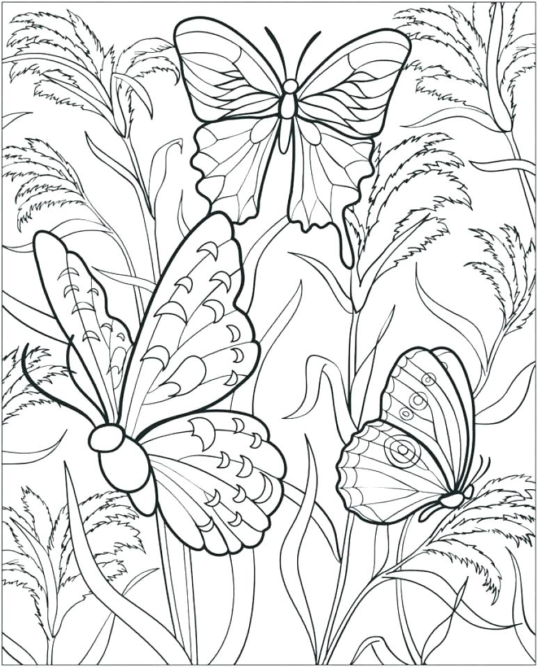 773x960 Butterfly Coloring Pages Printable Butterfly Coloring Sheet