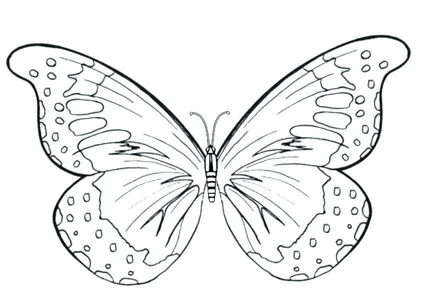 850x600 Coloring Butterfly Butterfly Wings Coloring Pages A Printable
