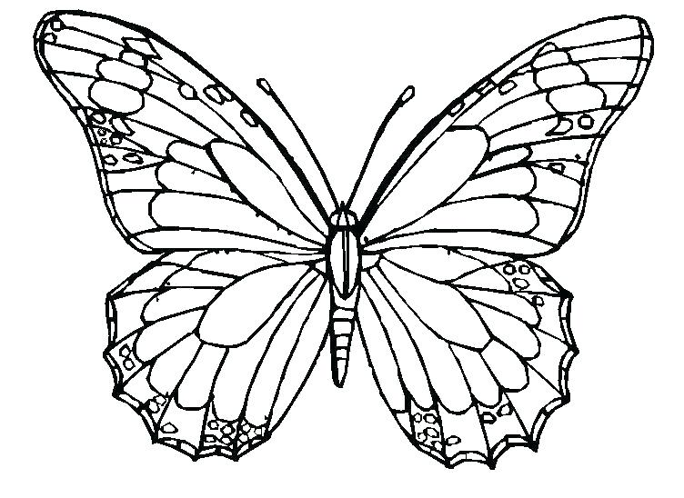 752x548 Coloring Page Butterfly Lovely Spring Coloring Pages Free