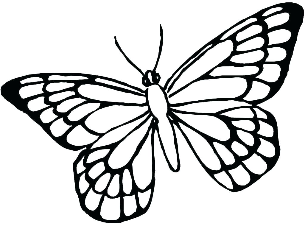 1024x759 Free Printable Butterflies Spring Coloring Page For Kids