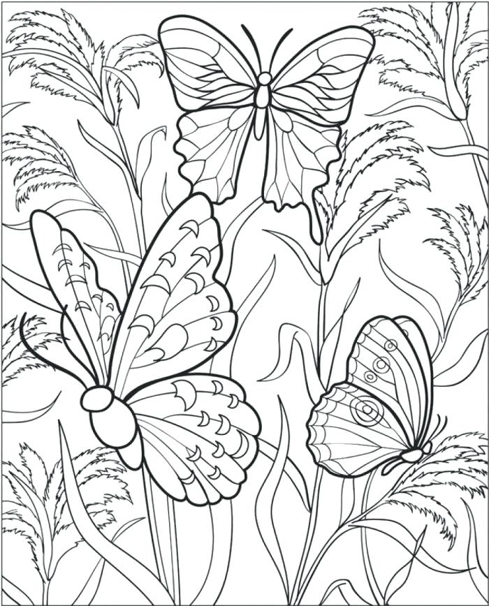 700x868 Free Printable Butterfly Coloring Pages Free Butterfly Coloring