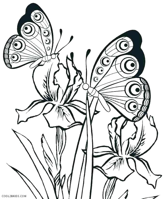 678x820 Life Cycle Coloring Pages Free Printable Butterfly Coloring Pages