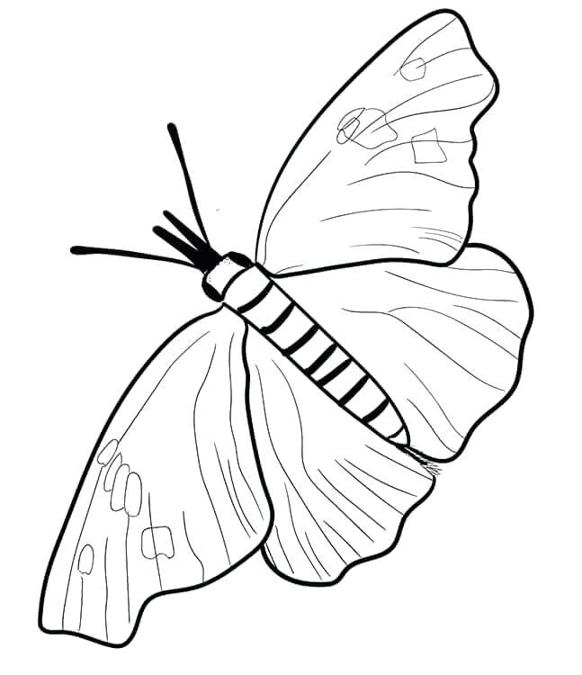 647x750 Printable Monarch Butterfly Coloring Pages Free Snout Page
