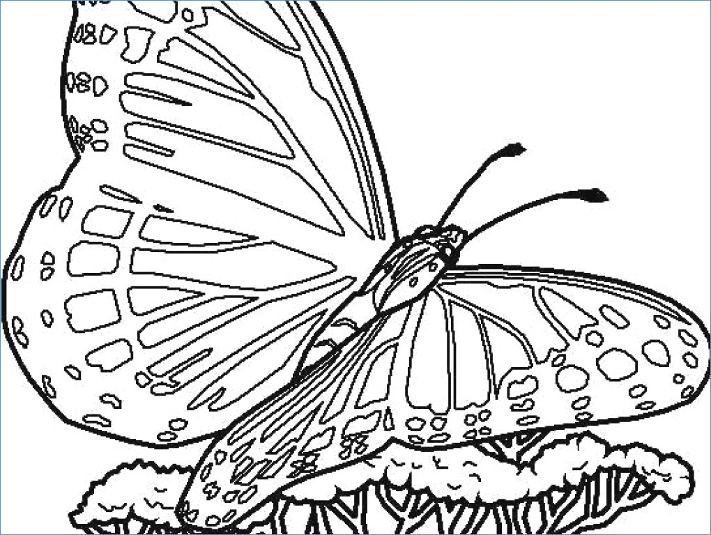 1020x768 Butterfly And Flower Coloring Pages For Kids