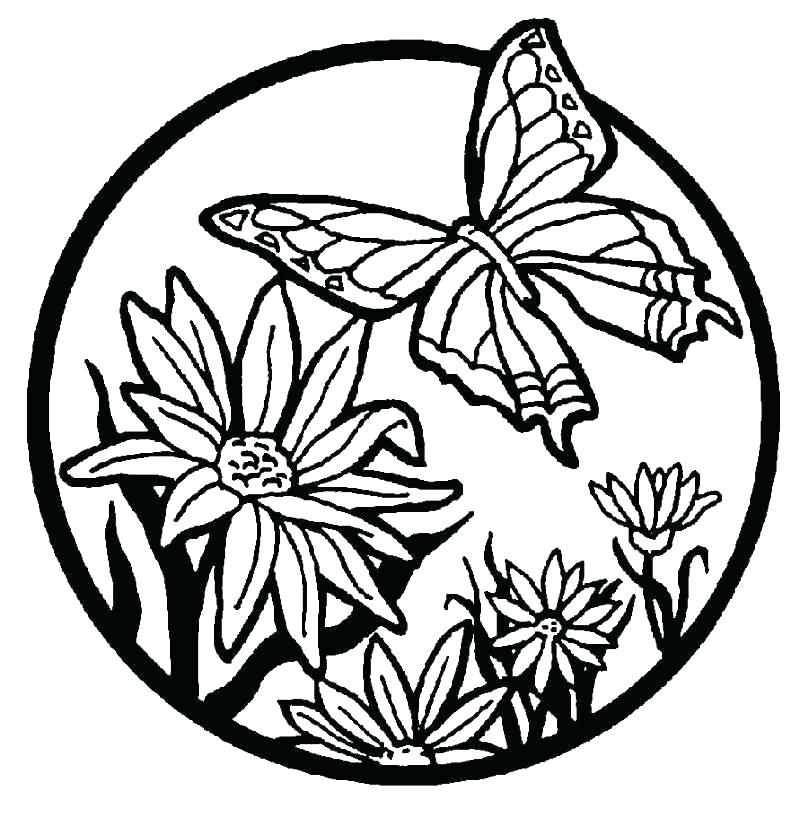 800x835 Butterfly Coloring Pages For Adults Printable Butterfly Coloring