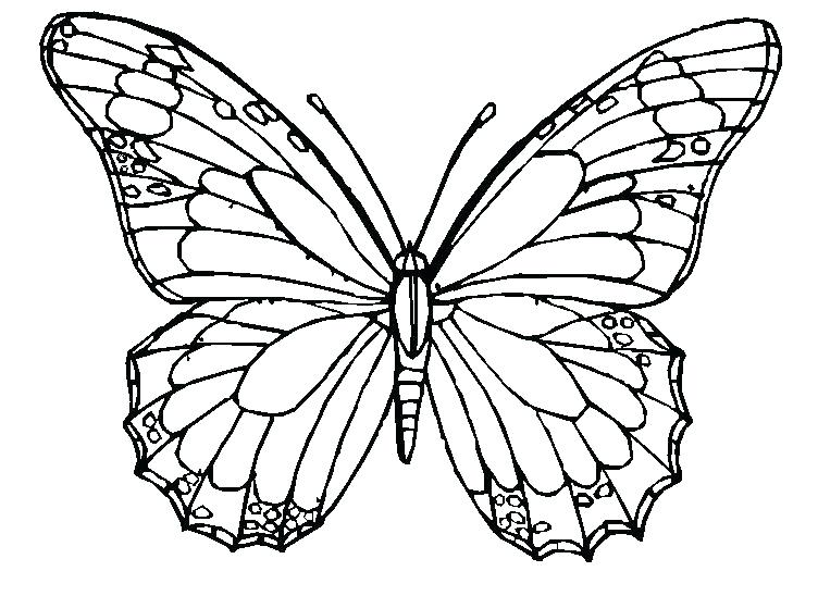 752x548 Butterfly Coloring Page Luxury Butterfly Coloring Pages