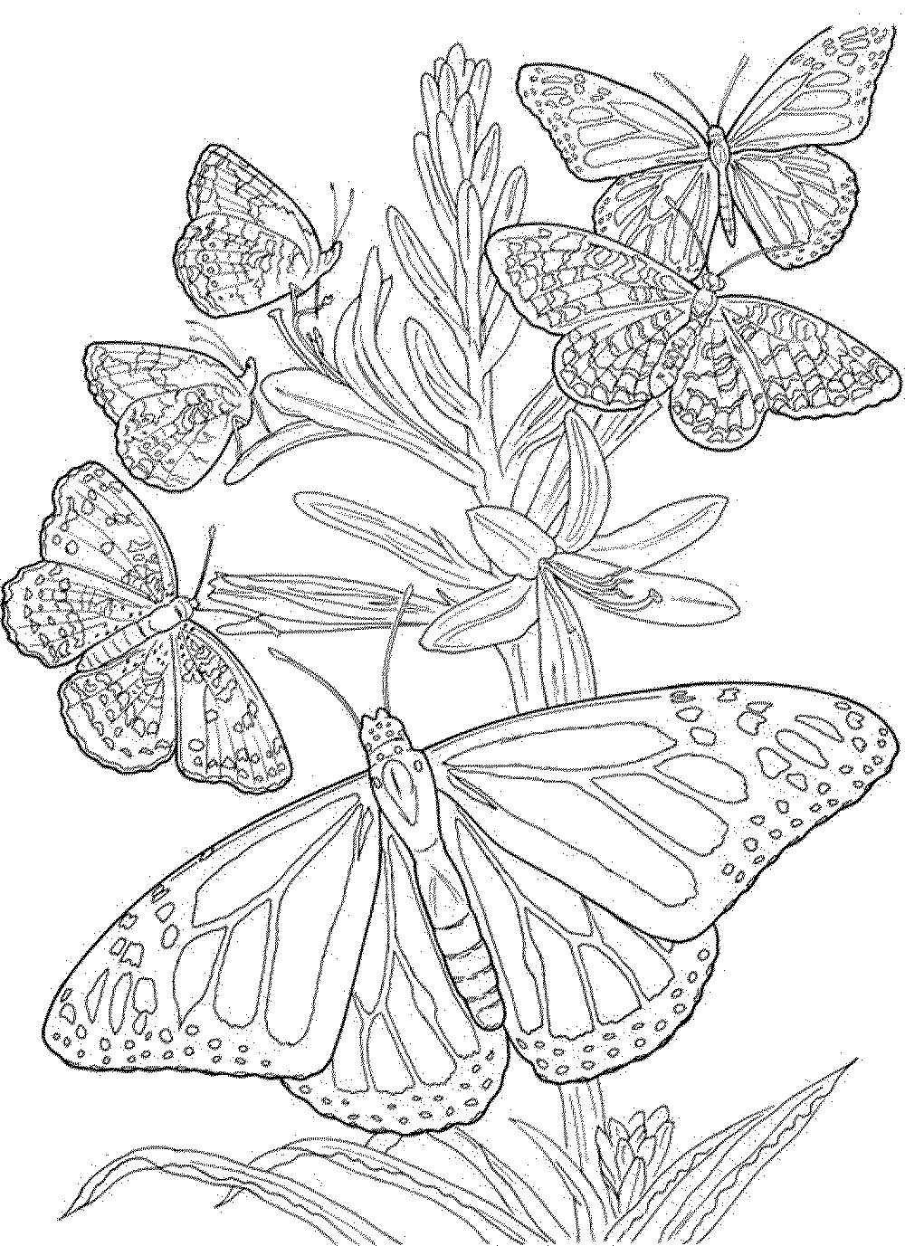 1000x1377 Butterfly Coloring Pages For Adults Mandala Sheets Free Christmas