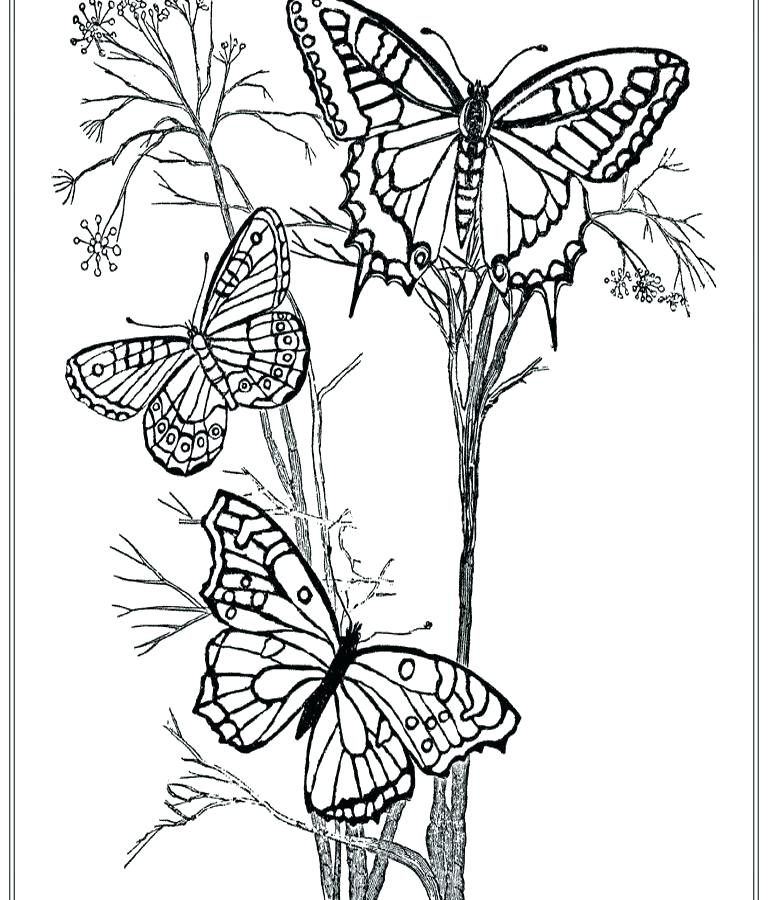 768x900 Butterfly Coloring Pages For Adults Printable Butterflies Coloring