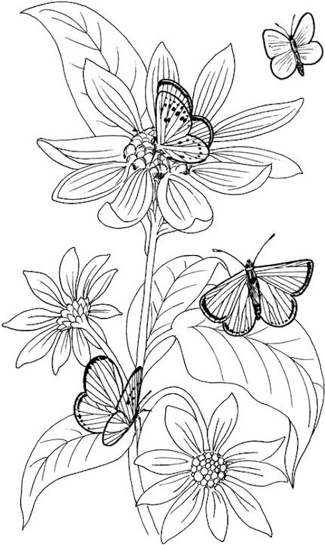 466x780 Free Printable Butterfly Coloring Pages Adults Perfect Butterfly