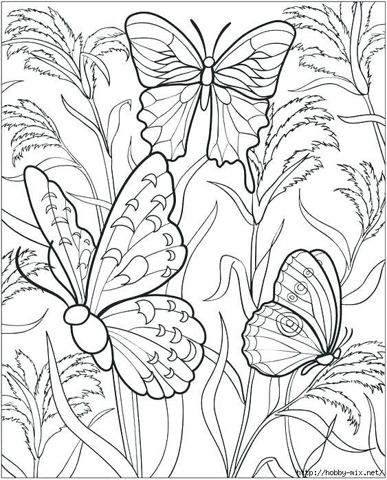 563x699 Coloring Pages Butterflies Excellent Free Butterfly Coloring Pages