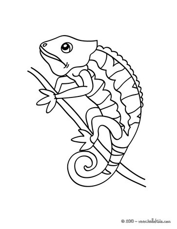 Free Printable Chameleon Coloring Pages