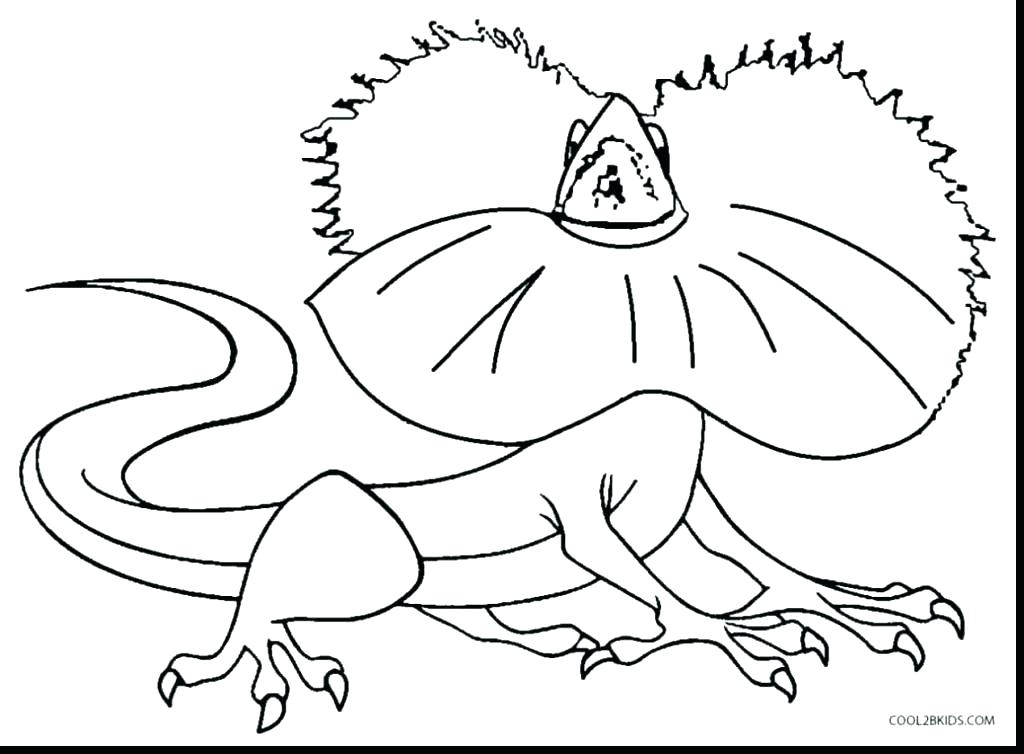 Free Printable Chameleon Coloring Pages at GetDrawings.com ...
