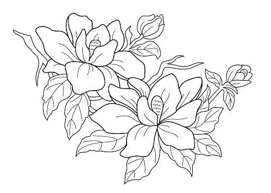 550x392 Flower Printable Coloring Pages Fancy Flower Coloring Pages