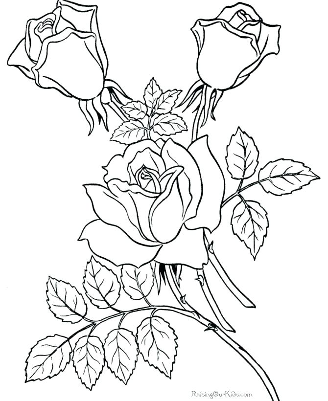 670x820 Printable Flower Coloring Pages For Adults Ideas Free Printable