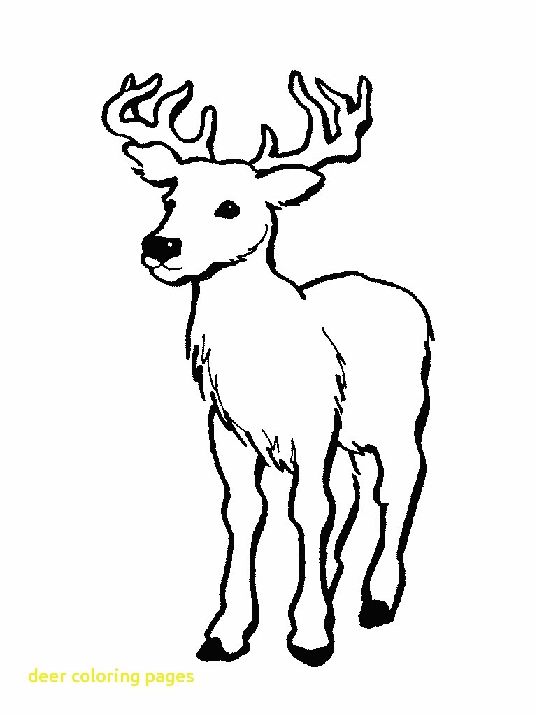 768x1024 Nice Printable Deer Pictures Free Coloring Pages New