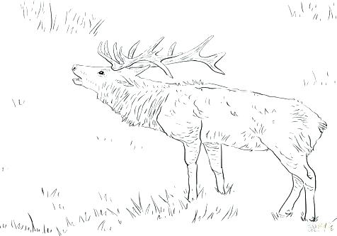 476x333 Printable Deer Coloring Pages For Adults Deer Coloring Picture Elk
